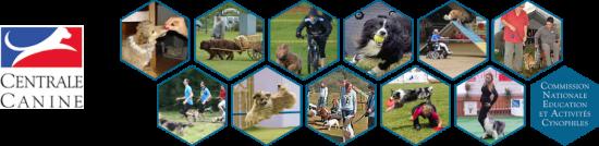 CNEAC-SCC_bandeau-activites-canines