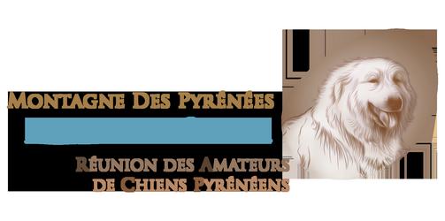 Découvrir le chien Montagne des Pyrénées