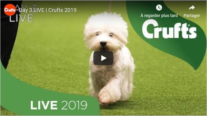 Crufts 20190309-3