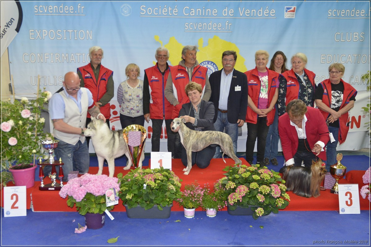 Podium 2019, avec une partie du comité de la Société Canine de Vendée