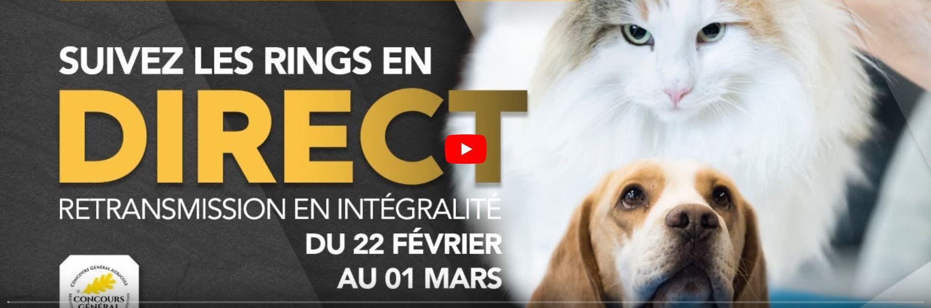 les chiens au CGA 2020