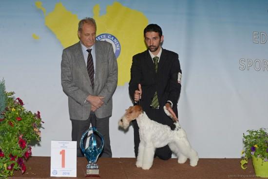 meilleur chien de l'exposition La Roche sur Yon 2016